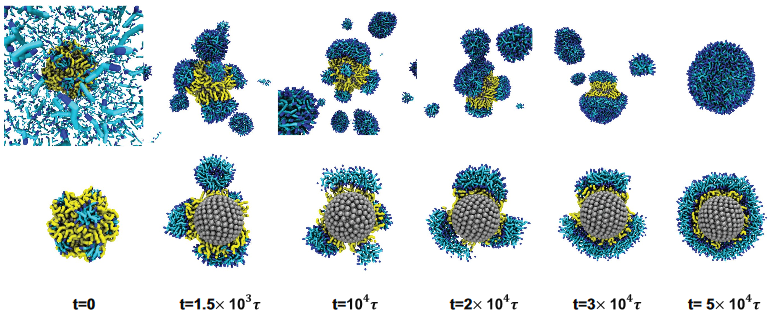 Self Assembly Of Nanoparticles And Their Potential As Drug