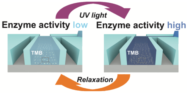 light switching of enzymatic activity in functionalized polymer brushes