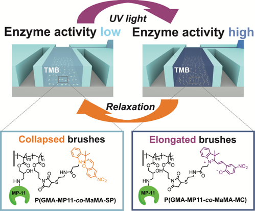 light-switching of enzymatic activity